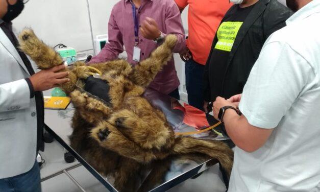 Comissão de Defesa Animal visita Centro Veterinário da Una Contagem